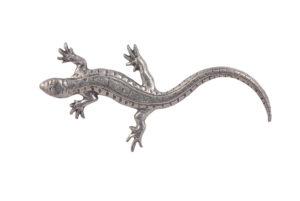 Lizard CGHL0009